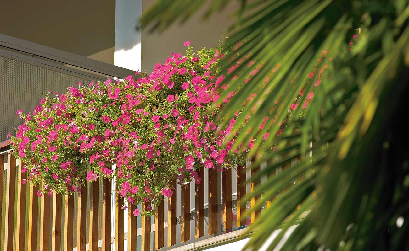 Pink petunias on the balcony