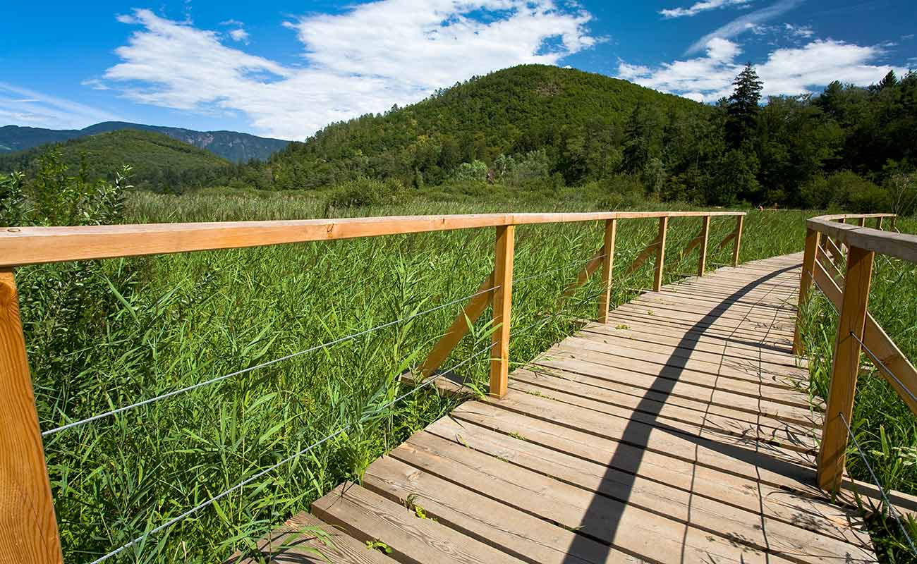 Wooden walkway among the vineyards of Lake Caldaro